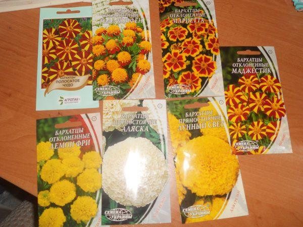 Бархатцы: выращивание из семян, уход