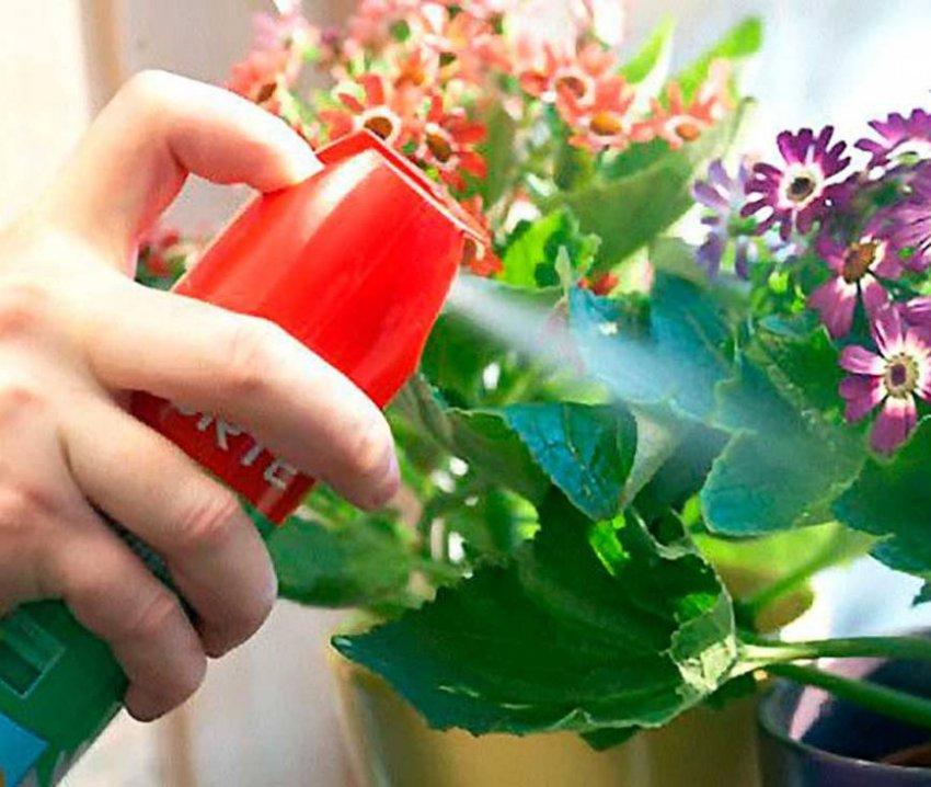 Мошки в цветах — как избавиться