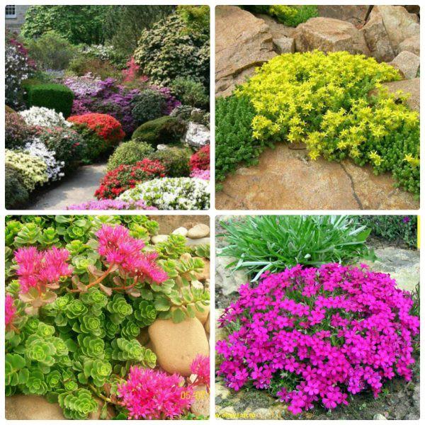 Обзор многолетних цветов, цветущие все лето