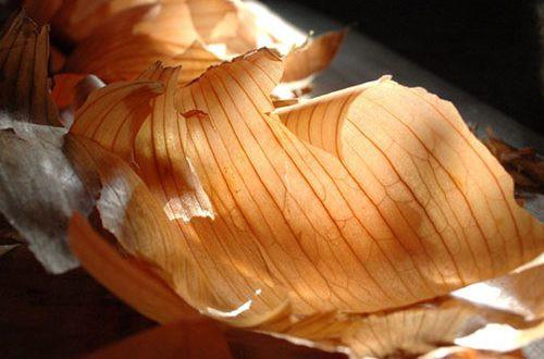 Настой луковой шелухи: применение для рассады, преимущества