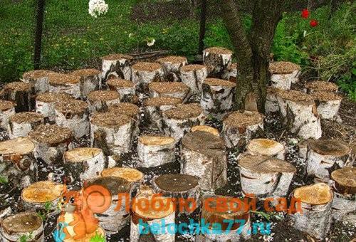 Выращивание вешенок в домашних условиях — грибное царство!