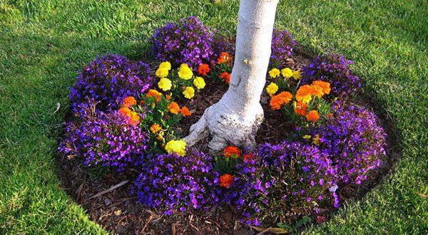 Что можно посадить под яблоней: подбор полезных культур