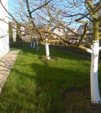 Побелка плодовых деревьев весной и осенью видео от эксперта
