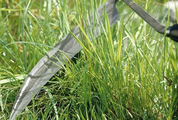 Первая стрижка газона после посадки: когда и как ее лучше провести