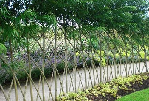 Живой забор на даче: что посадить по периметру участка?