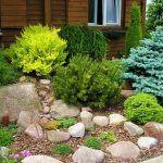 Хвойные растения для сада: разновидности, использование в оформлении участка