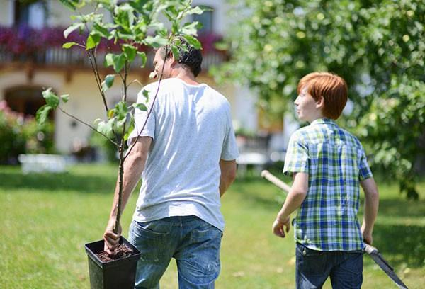 Посадка плодовых деревьев: сроки и особенности