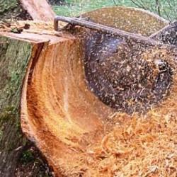 Как выкорчевать деревья на участке, Участок
