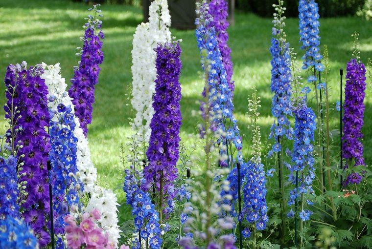 Цветы для сада цветущие все лето: лучшие варианты с фото