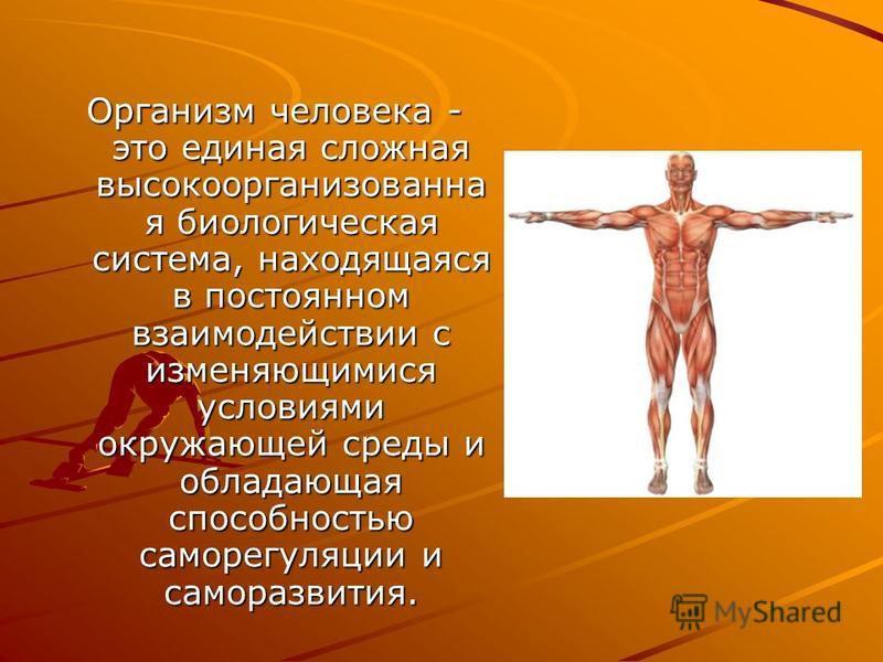 Организм человека сложная биологическая система