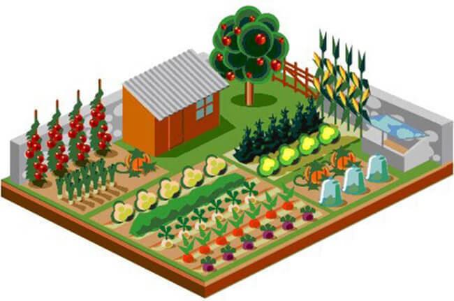 Севооборот на дачном огороде: умный возделывает урожай, а мудрый землю