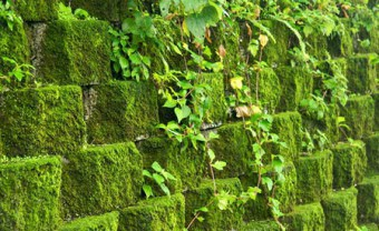 Декоративный мох: как разводить растение и применять в оформлении садового участка