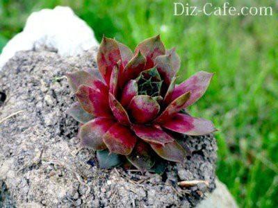 Почвопокровные растения и невысокие цветущие многолетники для сада