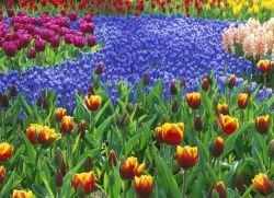 Посадка многолетних цветов осенью