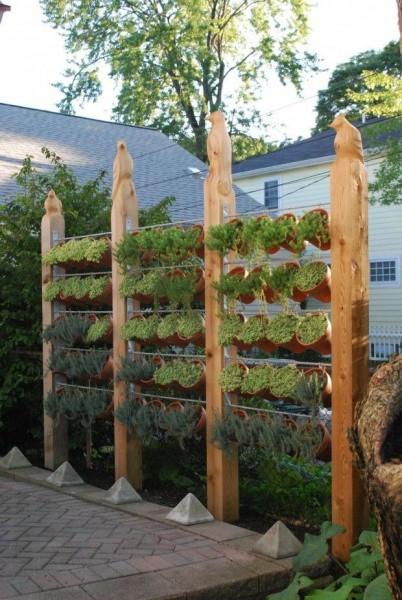 Вертикальное озеленение на даче фото