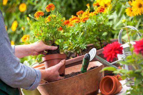 Посадка цветов в мае — советы как правильно высаживать рассаду и цветы