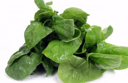 Шпинат: фото и описание овоща, состав, калорийность
