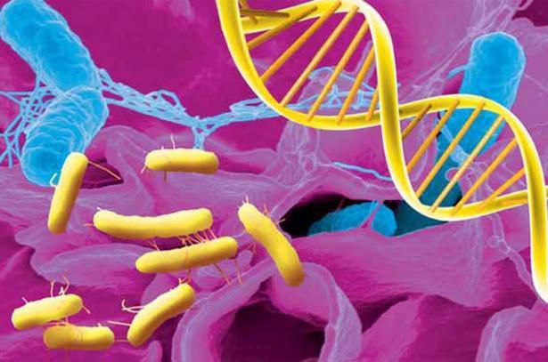 Ферменты в желудке: пепсин, липаза, желатиназа, амилаза