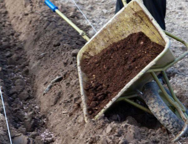 Как сделать живую изгородь на даче своими руками: посадка и выращивание