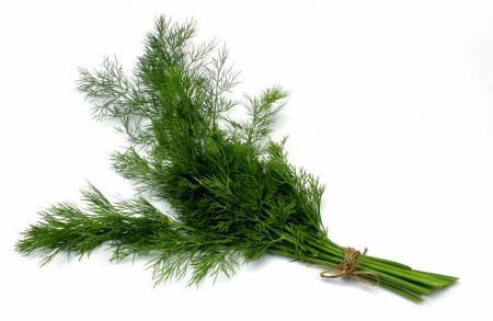 Укроп полезные свойства, применение семян укропа в народной медицине