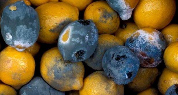 Как просроченные продукты превращаются в свежие — на что стоит обратить внимание