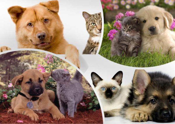 Налог на домашних животных в России 2019