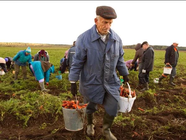 Надбавка к пенсии за работу в сельском хозяйстве более 30 лет