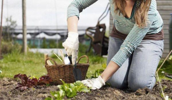 Налог на огород для дачников с 2019 года — новости