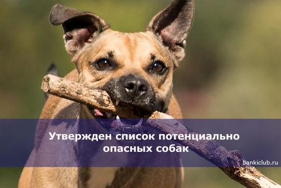 Утвержден список потенциально опасных собак