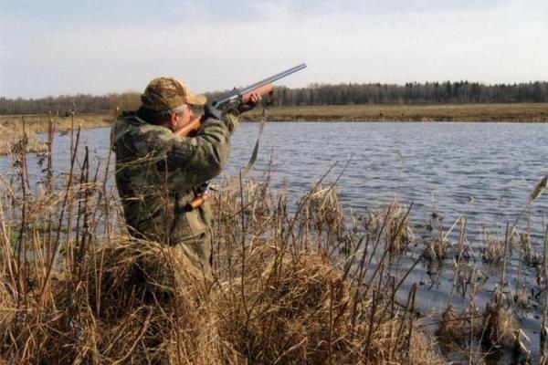 Когда наступит сезон охоты на уток в 2019 году: сроки осенней охоты 2019 в России по регионам