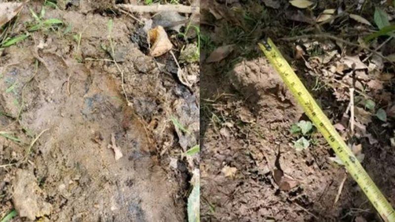 В Северной Каролине обнаружили следы снежного человека