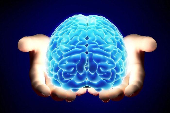 Сколько мозг человека живет после смерти и почему так происходит
