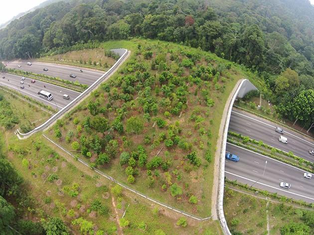 Экодуки - мосты для животных От Приморья до Сингапура
