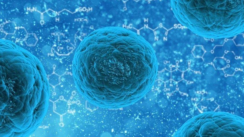 Ученые нашли белок, который способен защитить от всех вирусов