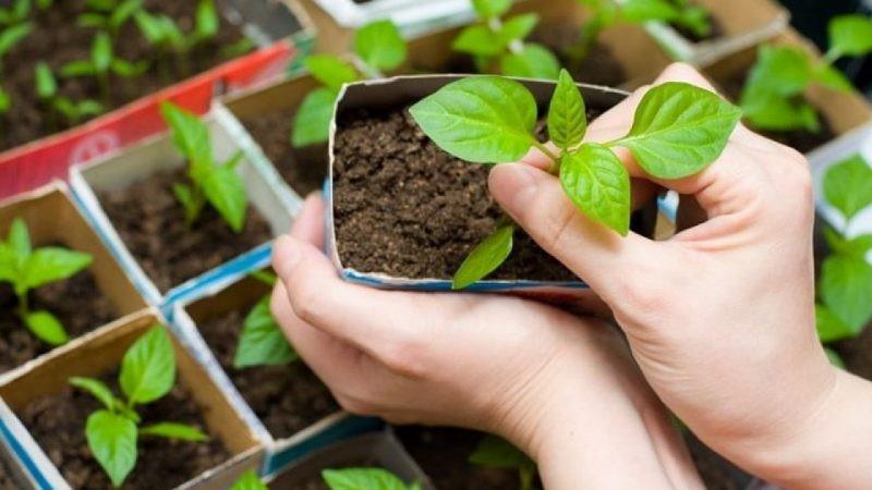 Лунный календарь посадок на март 2020 года описывает правила, которые помогут вырастить богатый урожай