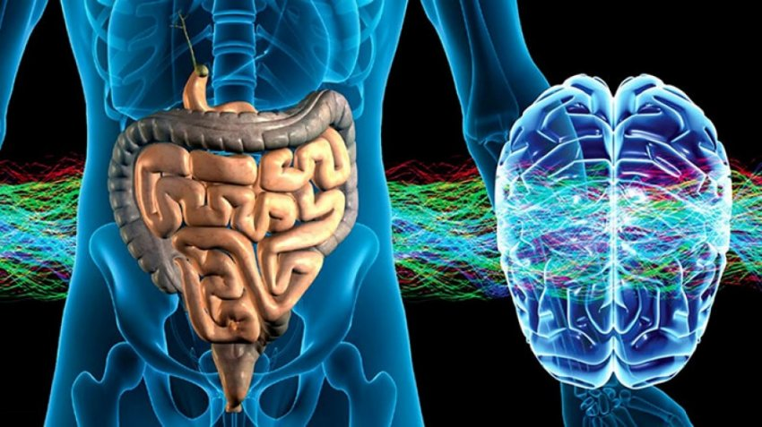 Как кишечные бактерии исцеляют и защищают ваш мозг