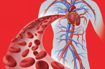 Названы доступные методы улучшения плохого кровообращения