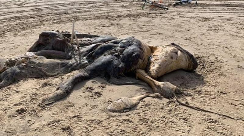 На берег Ливерпуля выбросило жуткое существо