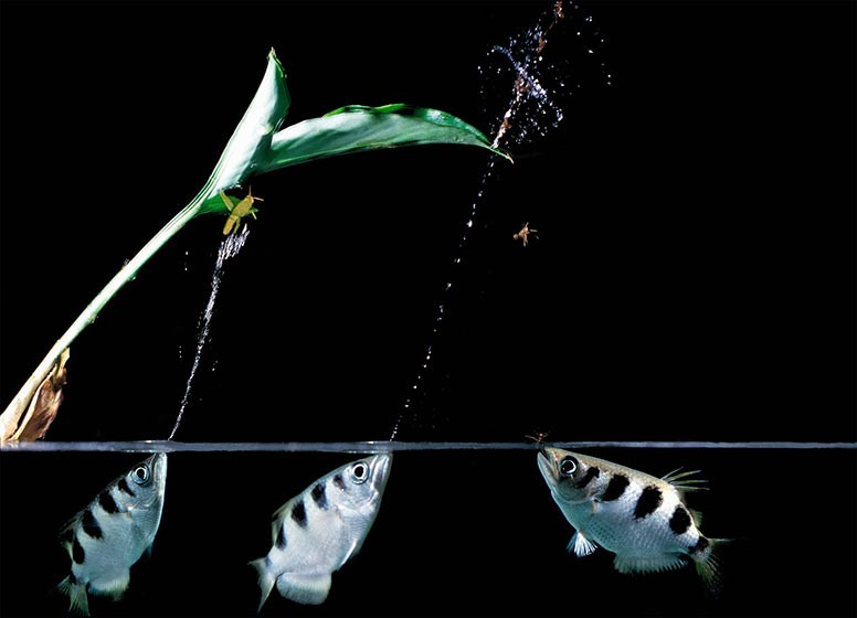 Загадки природы: симметрия и ассиметрия