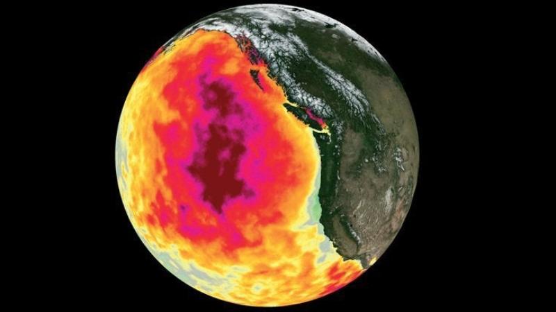 В Тихом океане продолжают появляться аномальные горячие пятна, в которых гибнет все живое