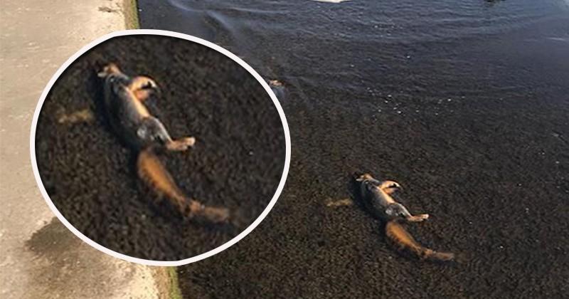 На пляже озера Мичиган обнаружили больше 100 мертвых белок
