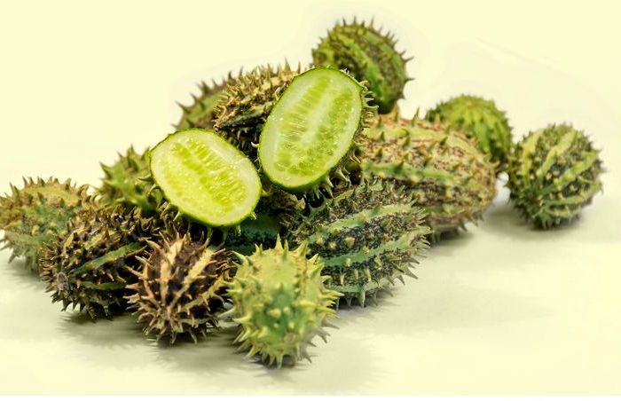 Чудеса селекции или как изменились фрукты и овощи