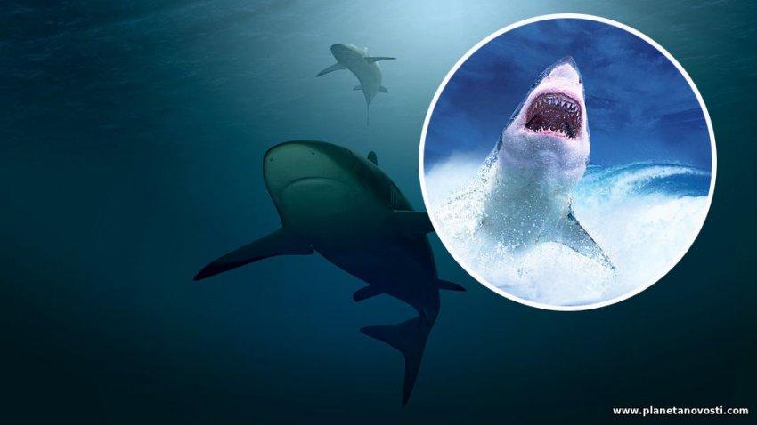 Число нападений акул в Австралии резко выросло: установлен новый годовой антирекорд