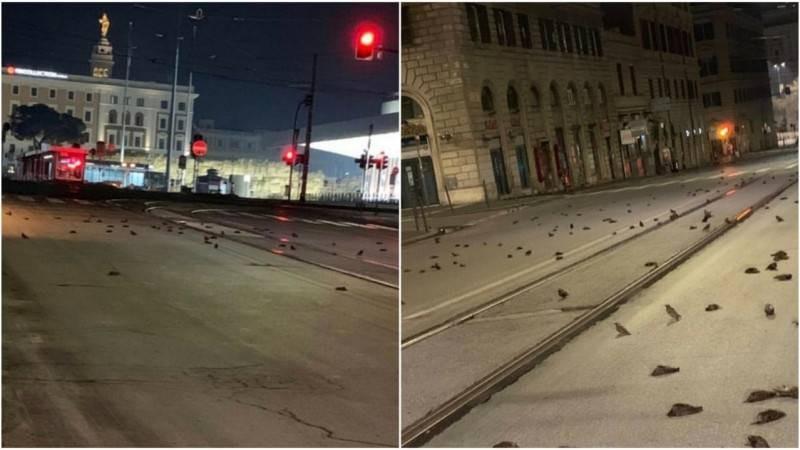 Дождь из мертвых птиц испортил настроение жителям Рима в новогоднюю ночь