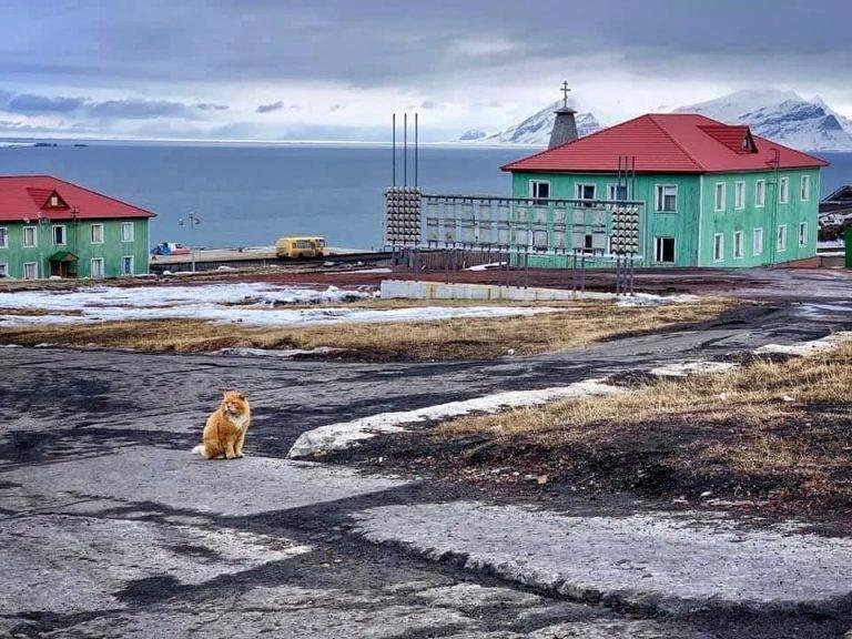 Как живет кот Кеша, единственный на Шпицбергене, и почему его называют песцом