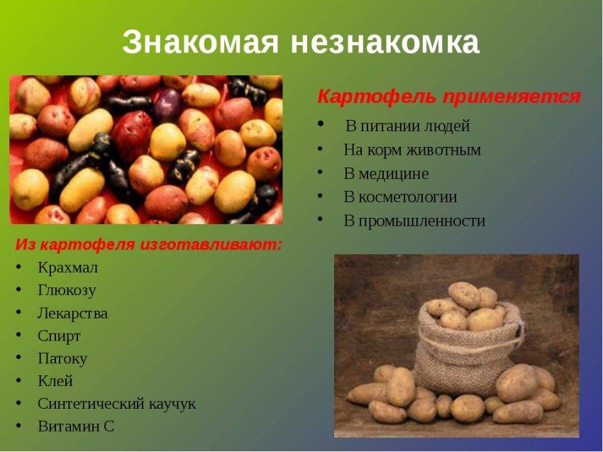 Какое значение для человечества имеет картошка