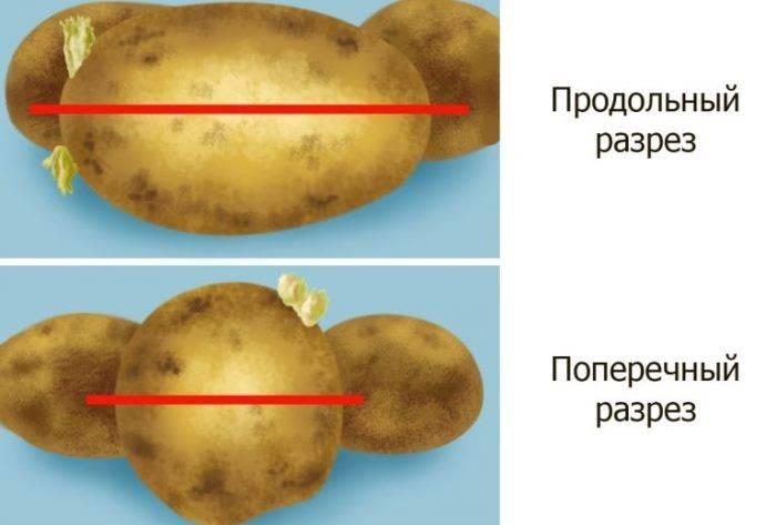 Как получить хороший урожай картофеля, используя проверенные способы его посадки