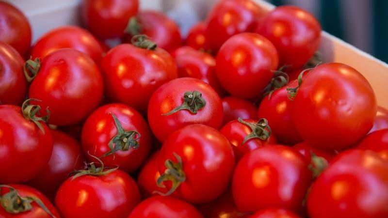 Чем и в каких случаях можно подкармливать рассаду помидор, чтобы плоды были крупными