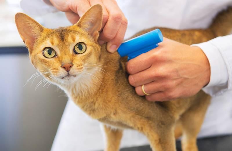 Регистрация домашних животных и другие правила, которые были вынесены на рассмотрение в Госдуму России