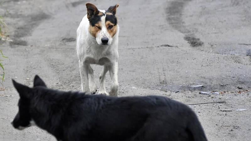 Собаки загрызли четырехлетнего ребенка в Башкирии